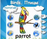 Тема: Птицы. Birds